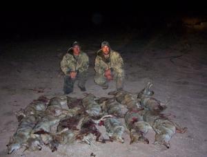 14_coyotes.jpg