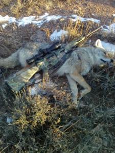 01-06-12, Walt harvested dog using .204 Cal, Rem R15 rifle @135 yards.jpg