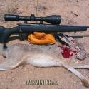 savage-bmag-17-winchester-super-magnum-hunt-report-8