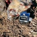 NE-California-Ground-Squirrel-Hunt-Report-17WSM-2