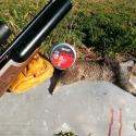 FX Boss 30 caliber airgun with a fat California Ground Squirrel