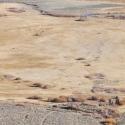 Open Field - Aerial Shot