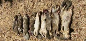 Ground Squirrel Hunt Results