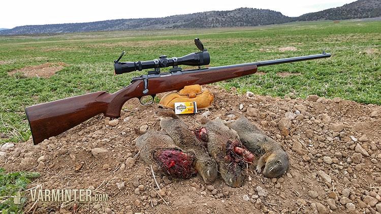 armscor 22 magnum rimfire ammunition review and hunt report