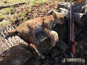 Savage .17HMR & a Tennessee Bobcat