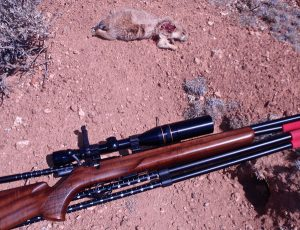 Prairie Dog Taken at 150 Yards with the Anschutz 17HMR