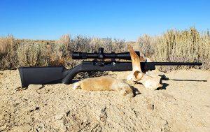 Whitetail Prairie Dog taken with the Savage Mach2