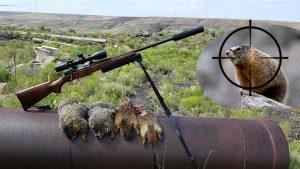 Rockchuck Hunting – 22 Creedmoor & 69 Grain Sierra Blitzking Bullets